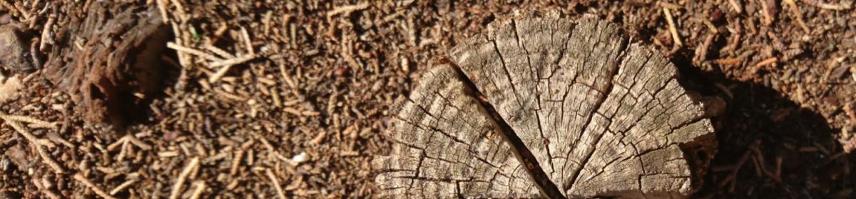 Društvo za zaščito lesa Slovenije